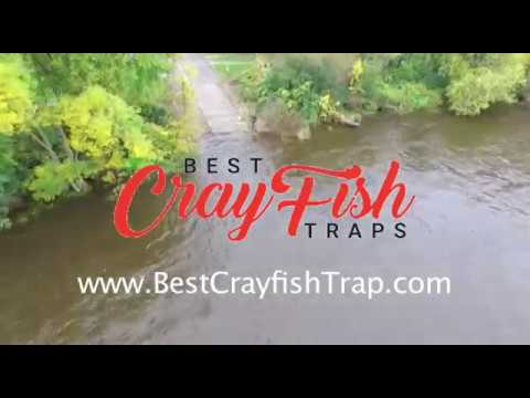 Best Crayfish Trap