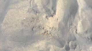 Ämblik Loksa rannal