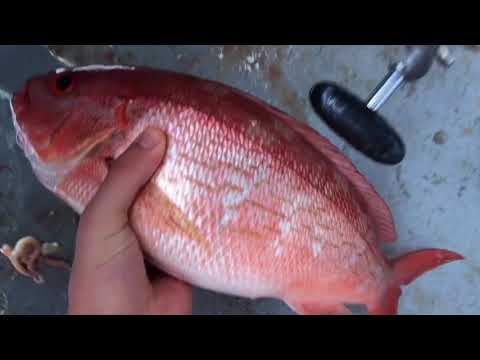 Florida Snapper Fishing On The Star Queen | June 8th 2018