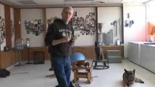 Chicago Canine/ Jim Talking Training