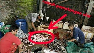 Rumah potong Ular di Cirebon sampai nyicip nasi Jamblang yang lezat.