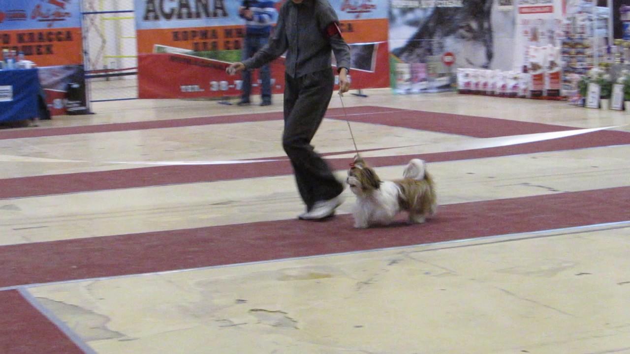 Объявления о продаже собак и щенков в москве на avito.