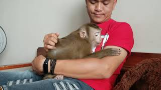 Monkey Baby Nui | Nui was happy to hug her father after 3 days of absence