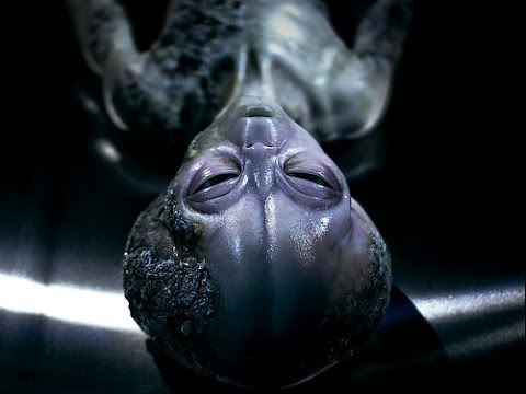 Alien Anthology Trailer - Full Movie - SteelBook - Blu-Ray - Egg - Blu Ray - Wiki - Unboxing Review