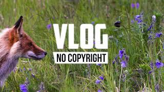Ikson - Last Summer (Vlog No Copyright Music)