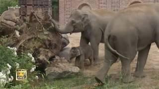 Neue Attraktion für die Elefantenfamilie