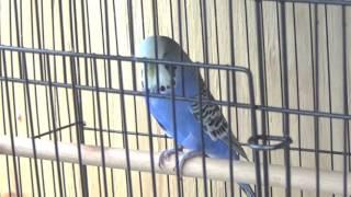 #19 breeding update: BABIES!!!!! (who knew?)