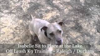 6yo Pit Mix Isabelle Before And After Video - Dog Training Raleigh Durham