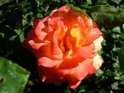 Aaron Copland; Sonata, Andante Sostenuto