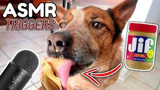 ASMR My Dog Eating Peanut Butter For The First Time (ASMR TRIGGERS) WITH REAL SOUNDS!!!!