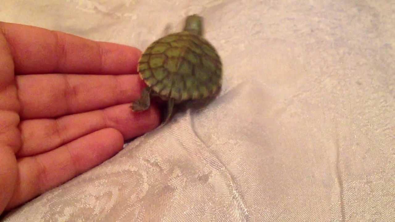 Уход за сухопутной черепахой. Доброе утро Пышка! - YouTube