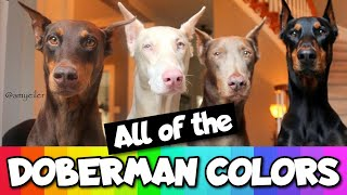All the Doberman Colors That Exist