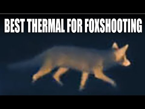 Best Thermal Imager For Foxshooting
