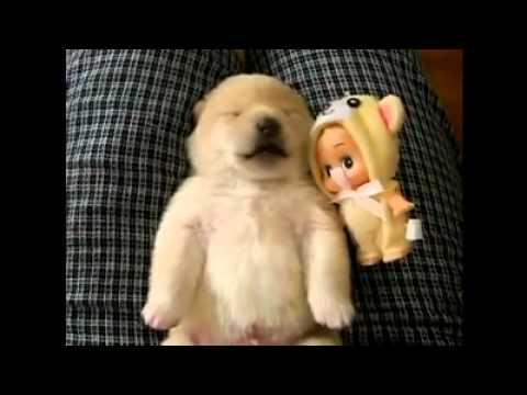 Sleeping Puppy Dreaming