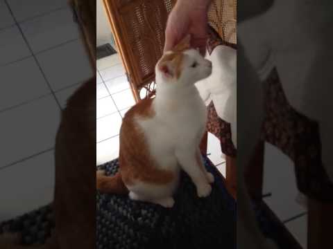 Cat bites man