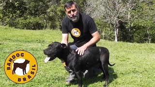Jairo Teixeira mostra a sua nova ninhada de Bandog