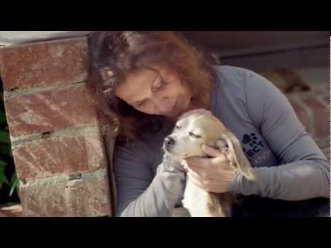 Beagle Freedom Project: Rescue #6 - San Diego, CA