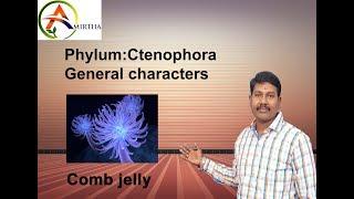 neet class ctenophora