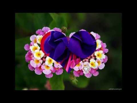 Как выглядят самые красивые цветы
