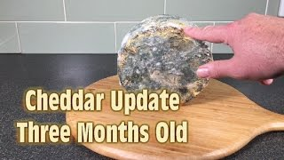 Cheddar Cheese 3 Month Update  A Scary Halloween Surprise