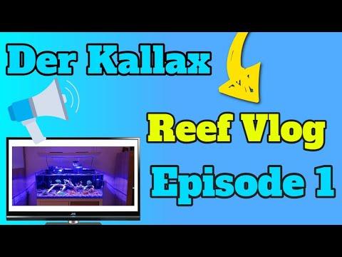 """der-kallax-""""reefvlog""""-episode-1"""