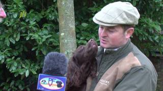 Ftch. Heolybwlch Fatty - Winner Of The 2012 Cocker Spaniel Championship