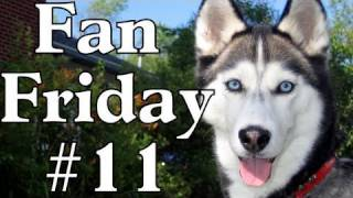 Do They Drool? Favorite Toy? T-shirts? - Fan Friday #11 - Siberian Husky