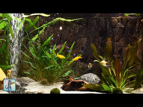 Relaxing Aquarium Fish Tank Sounds ~ NO MUSIC 🐟