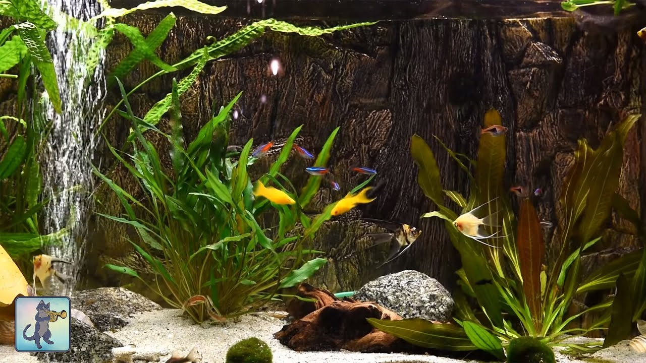 Relaxing Aquarium Fish Tank Sounds ~ NO MUSIC ?