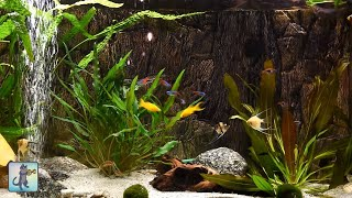 Relaxing Aquarium Fish Tank So…