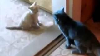 Ржачные Прикольные кошки Это очень Забавно смотреть!!
