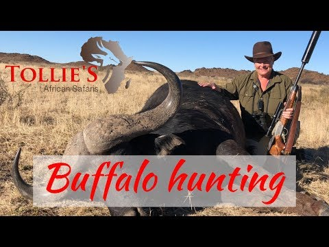 Cape Buffalo Hunting In Africa | Buffalo Hunt At Tollies African Safaris
