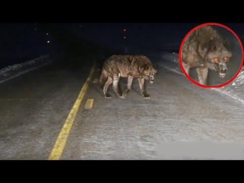 10 incontri ravvicinati con animali selvatici sulla strada