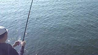 fishingmax泉大津 2 3大津川 thumbnail