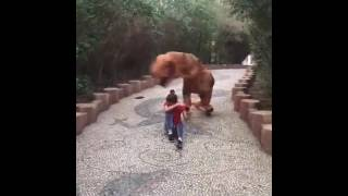 vuclip Funny dinosaurus and gorila video lucu