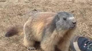 Marmotte Flaine 290407