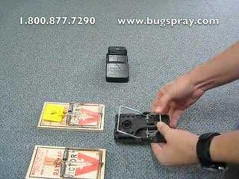 Rat Trap Sets - How to set a Rat Trap safely
