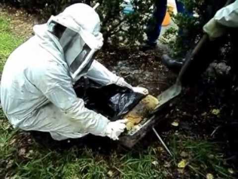 El maravilloso mundo de las abejas - The wonderful world of bees de YouTube · Duración:  13 minutos 18 segundos  · Más de 72.000 vistas · cargado el 22.10.2012 · cargado por LUIS MIGUEL MATOS Barroso