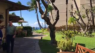 Kaanapali Shores Condominium Resort Grounds | Lahaina, Maui | Hawai'i