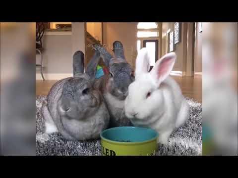 Komik ve Sevimli Tavşanlar Part 4