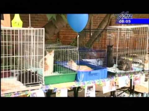 Выставка-раздача кошек и собак в Калуге