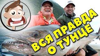 Вся правда о тунце Рыба тунец Консервированный тунец Ценность тунца Токмаков