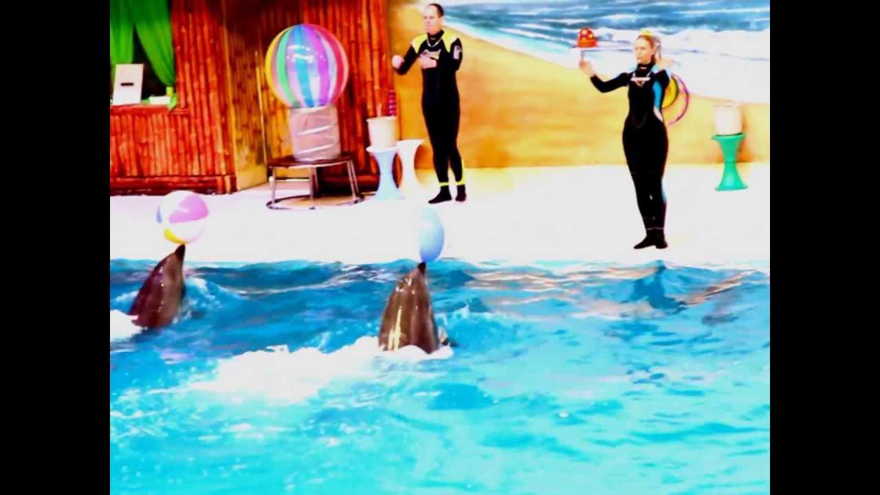 فيديو عرض الدلافين في دبي Dolphin Show In Dubai Youtube