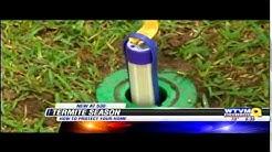 Termite Control & Damage Prevention: Tips for Termite Season in Columbus, GA by Arrow Exterminators