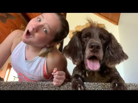Big dog gets jealous of friend's attention, puts an end to it