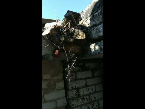 Вопрос: Когда на крышах растут деревья?