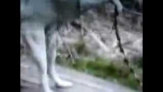Жизнь собачья или пес-онанист(the dog jerks off)