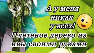 Русская ива Плетение дерево из ивы своими руками бесплатно
