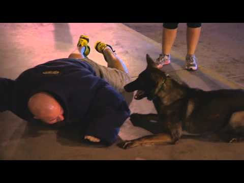 "advanced-training-best-protection-dogs-for-sale-""iller""-scenario-training-robbery"