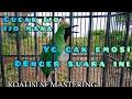 Cucak Ijo Gacor Nembak Panjang Ngeroll Tembakan Istimewa  Mp3 - Mp4 Download